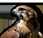 http://falcoware.com/images/Falco_85x75.png